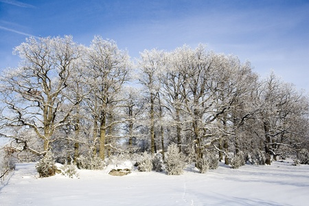 Winter landscape with trees and blue sky photo
