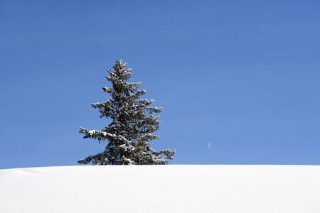 Lonely Christmas Tree in Winter Landscape Stock Photo - 12302944