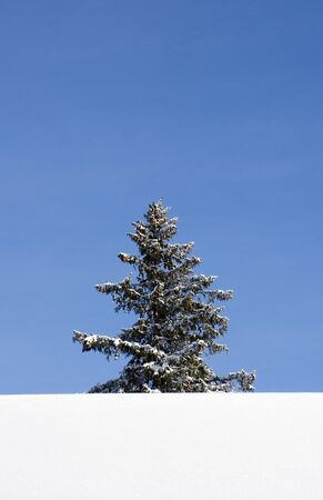 Lonely Christmas Tree in Winter Landscape Stock Photo - 12302962