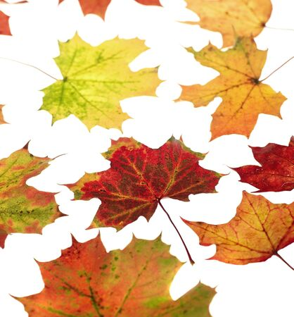 Group of Autumn leafs isolated on white background Stock Photo - 12395938
