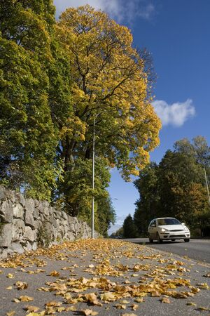 One car in Autumn Environment photo