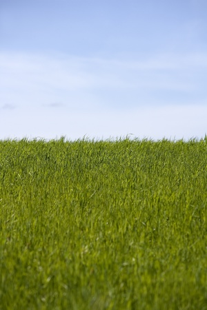 Green Grass in front of blue sky photo