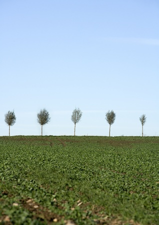 blasted: Blasted Trees in a row