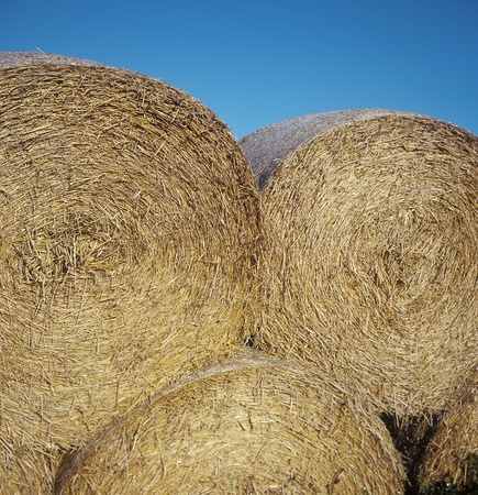 Close up of a pile of Hay stacks photo