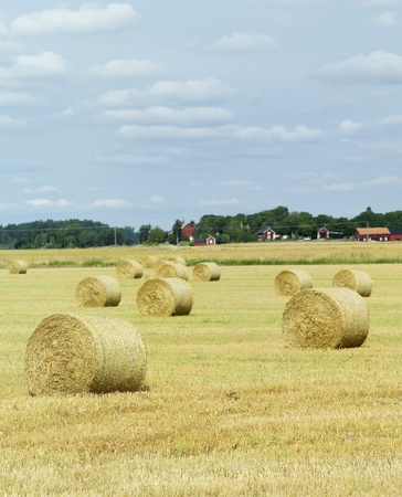 Hay stacks on a field photo