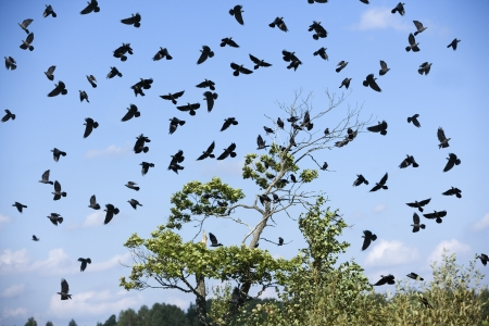 Large group of birds in the sky Stock Photo - 12833794