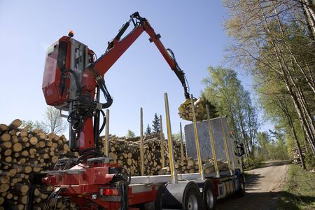 Loading Timber in the forest