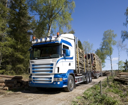 Truck with timber in the forest photo