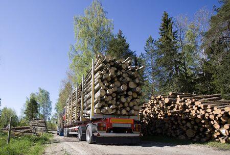 LKW mit Holz im Wald Standard-Bild