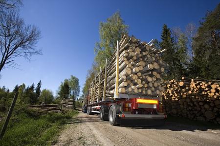LKW mit Holz im Wald Standard-Bild - 13631889