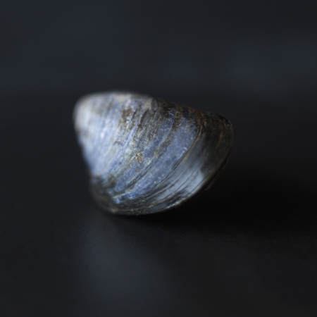 Close up of a mussle