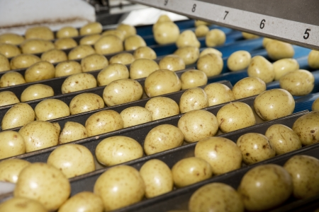 food drink industry: Detail from a Potatoe Industry Stock Photo