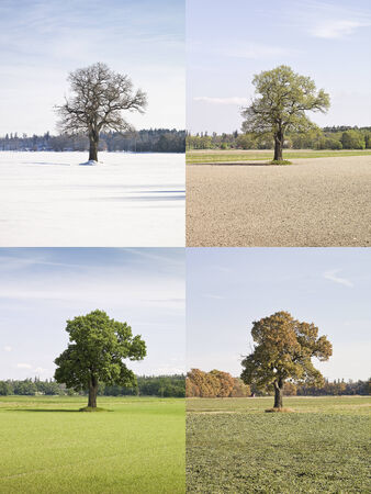 four objects: Collage of a tree in four seasons
