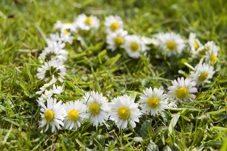 daisy chain in the shape of a heart on the grass