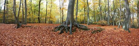 panoramic view of forest floor full of leaves in autumn time photo