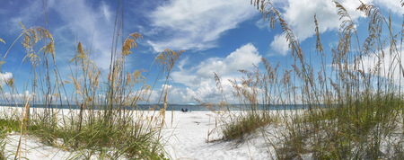 Panoramic view looking through reeds of sunloungers and umbrella on a beach