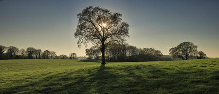 Panoramablick auf den hinterleuchteten Baum am späten Nachmittag im Frühling in The Chilterns, England