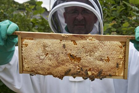 Beekeeper inspecting a frame of honey from hive