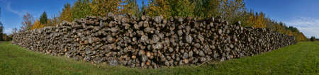Panoramic photograph of log stacks in forest during conservation project