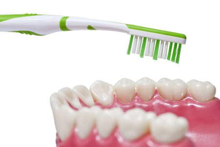 molares: Prótesis de plástico y cepillo de dientes en blanco