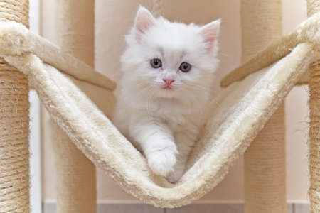 big eyes: Cat, kitten, cat house, cat tree Stock Photo
