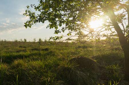 non urban: Sun in the branches of a tree. Stock Photo