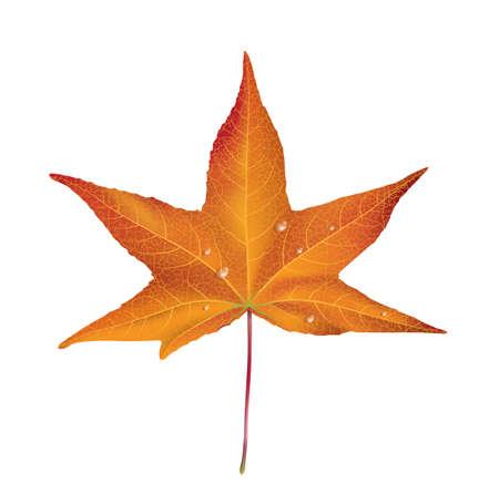 Illustration of an autumn dry fallen leaf Stock Vector - 21084795