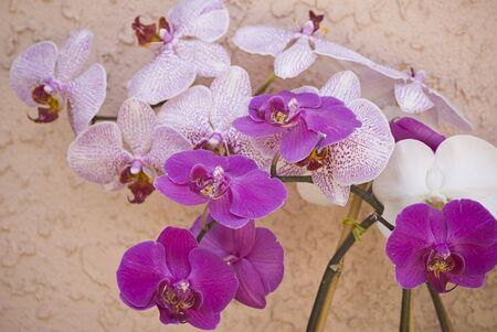 Orchid blooms on a coral pink background 版權商用圖片
