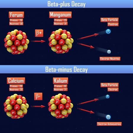 Beta-plus-Zerfall und Beta-Minus-Zerfall Standard-Bild - 24660420