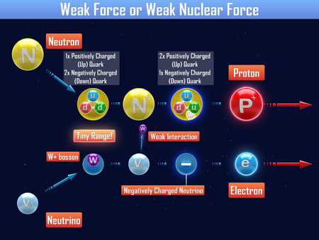 negatively: Weak Force or Weak Nuclear Force