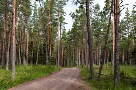 The road through a pine forest, which leads from one monastery to another. Valaam is a cozy and quiet piece of land, the rocky shores of which rise above the lush waters of lake Ladoga