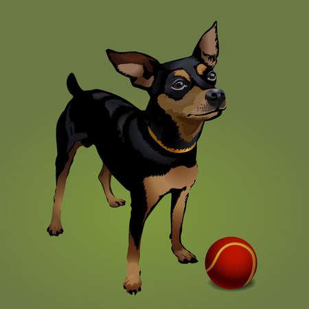 doberman: Der kleine Hund mit roten Kugel Illustration