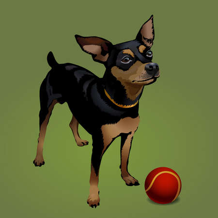 pincher: The small dog with red ball