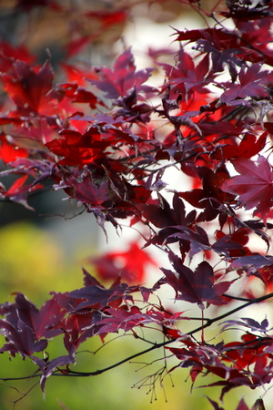 The red leaves on the tree.