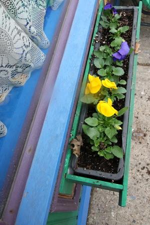 Pansies nella fioriera. Archivio Fotografico - 98963984