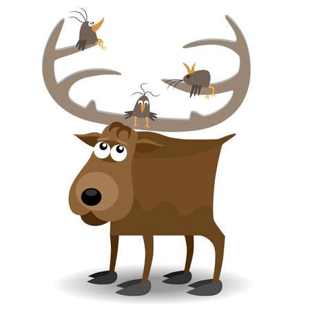 moose: Moose and birds