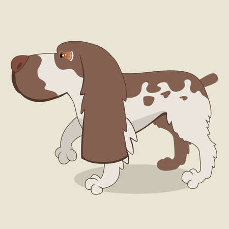 spaniel: Cartoon illustration of spaniel dog