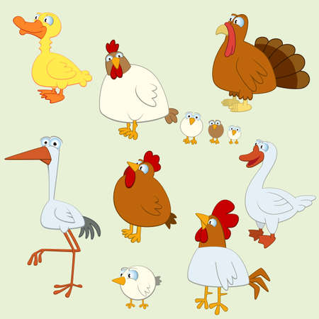 Cartoon Bird Set of  Domestic Birds Vector