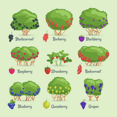 Cartoon images berry bushes
