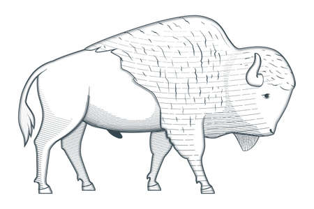 Standing bison illustration