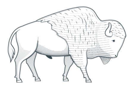 Standing bison illustration 版權商用圖片 - 131778899