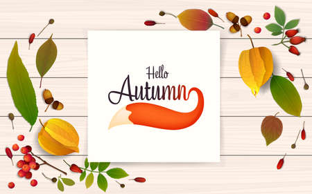 Autumn sale banner design template on a white wooden table. Colorful autumn leaves, paper, physalis, rowan berries and fox tail. Poster for fall season shopping promotion. Realistic vector illustration Illustration