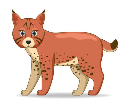 Bobcat animal standing on a white background. Cartoon style vector illustration