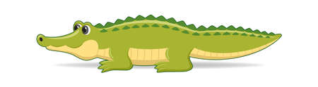 Alligator animal standing on a white background. Cartoon style vector illustration Illustration