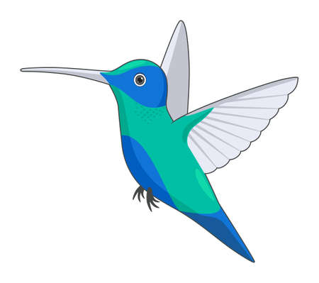 Hummingbird bird on a white background. Cartoon style vector illustration
