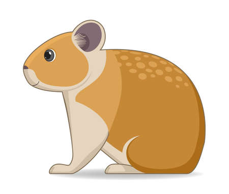 American pika animal standing on a white background. Cartoon style vector illustration