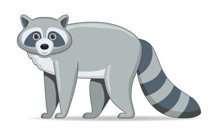 Raccoon animal standing on a white background. Cartoon style vector illustration