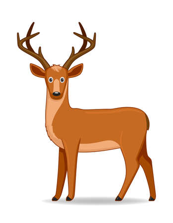 American deer animal standing on a white background. Cartoon style vector illustration Illustration