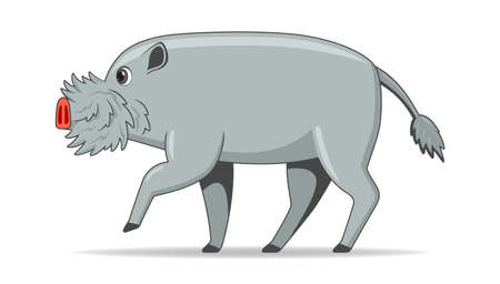 Bornean bearded pig animal standing on a white background. Cartoon style vector illustration Illustration