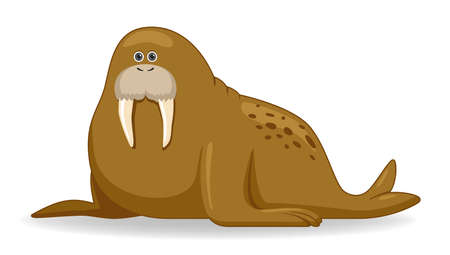 Walrus animal standing on a white background. Cartoon style vector illustration
